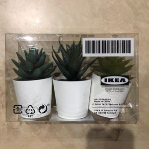 Ikea 3 Succulents (1 pack of 3)